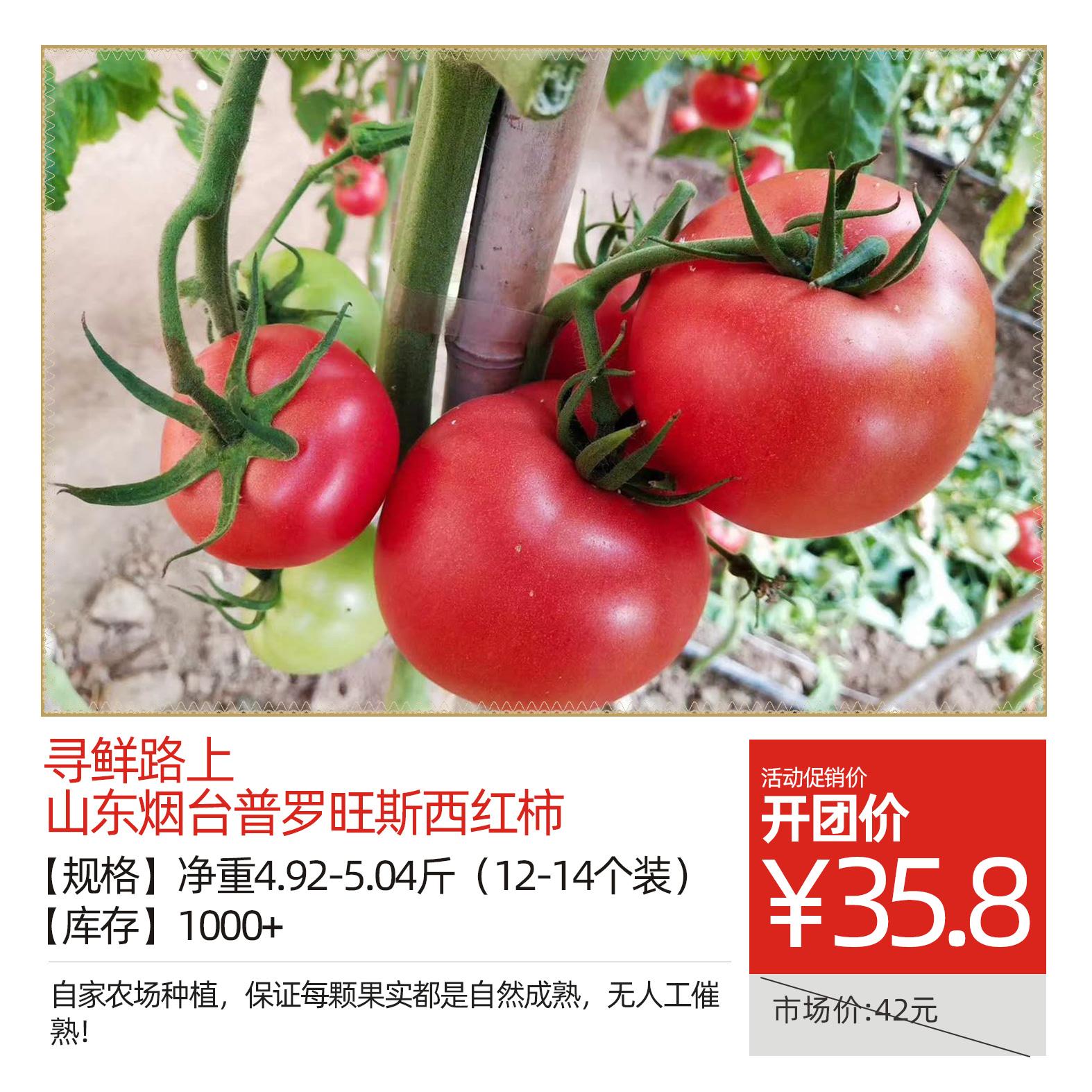 寻鲜路上山东烟台普罗旺斯西红柿